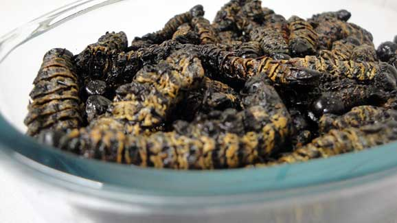 Good old madora (mopani worms)